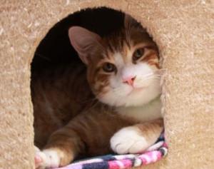 Waco TX No-Kill Pet Rescue Shelter | Fuzzy Friends Rescue