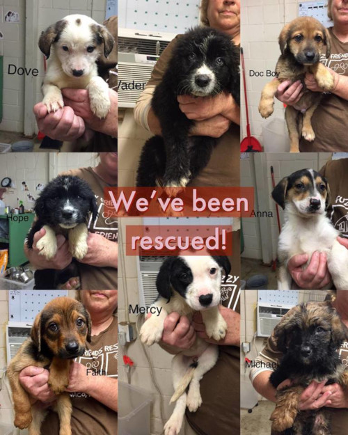 Waco TX No-Kill Pet Rescue Shelter   Fuzzy Friends Rescue